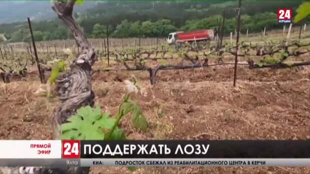 Будущее отрасли. В федеральный закон о виноградарстве и виноделии хотят внести поправки: какие и что это даст?