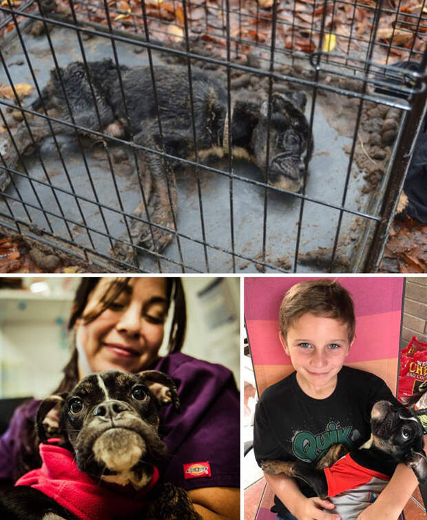 Умирающая собака была заперта в клетке. Но любовь вернула ее к жизни Счастливый конец, животные, спасение