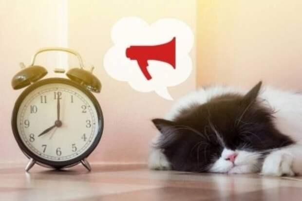 Пока вы спали: самый важный праздник в стране,за животных на дачах могут начать штрафовать