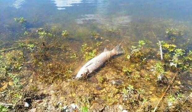 Жители Нальчика пожаловались наусыпанный дохлой рыбой берег озера