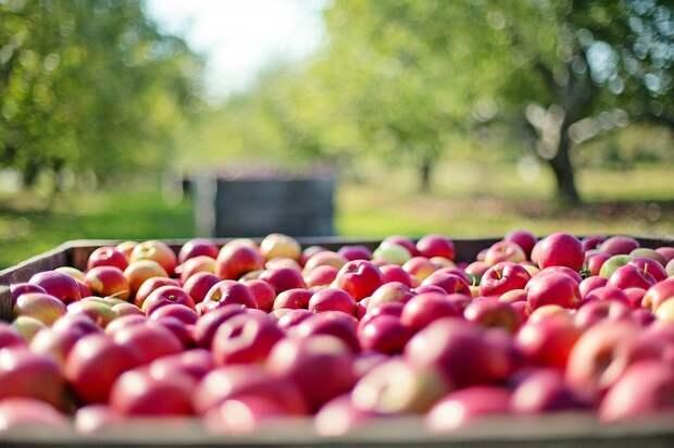 В Польше с горечью отреагировали на «яблочную самодостаточность» России