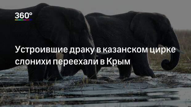 Устроившие драку в казанском цирке слонихи переехали в Крым