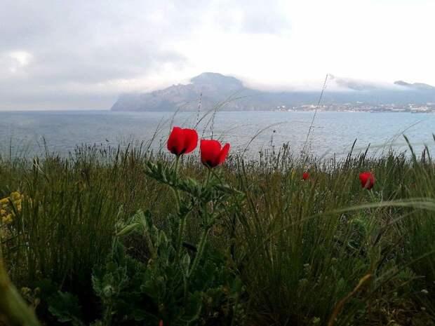 Погода в Крыму на 8 мая: дождь, гроза и тепло до +26°