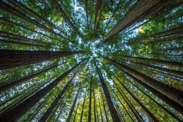 Что произойдёт, если природные ресурсы иссякнут?
