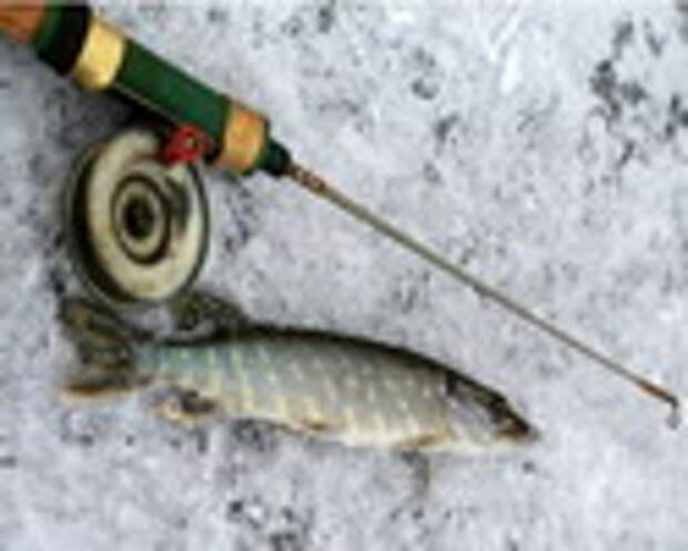 За хищником с поплавком со льда