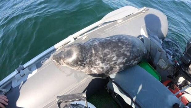 Минприроды объяснило массовую гибель тюленей в Каспийском море браконьерством