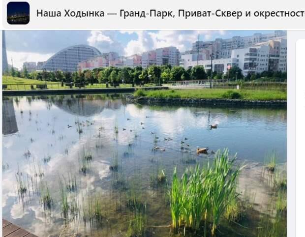 Фото дня: тихое утро на Ходынке