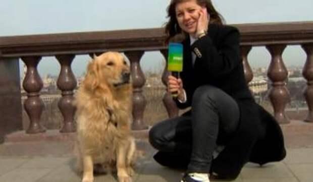 Золотистый ретривер украл микрофон у журналистки в прямом эфире
