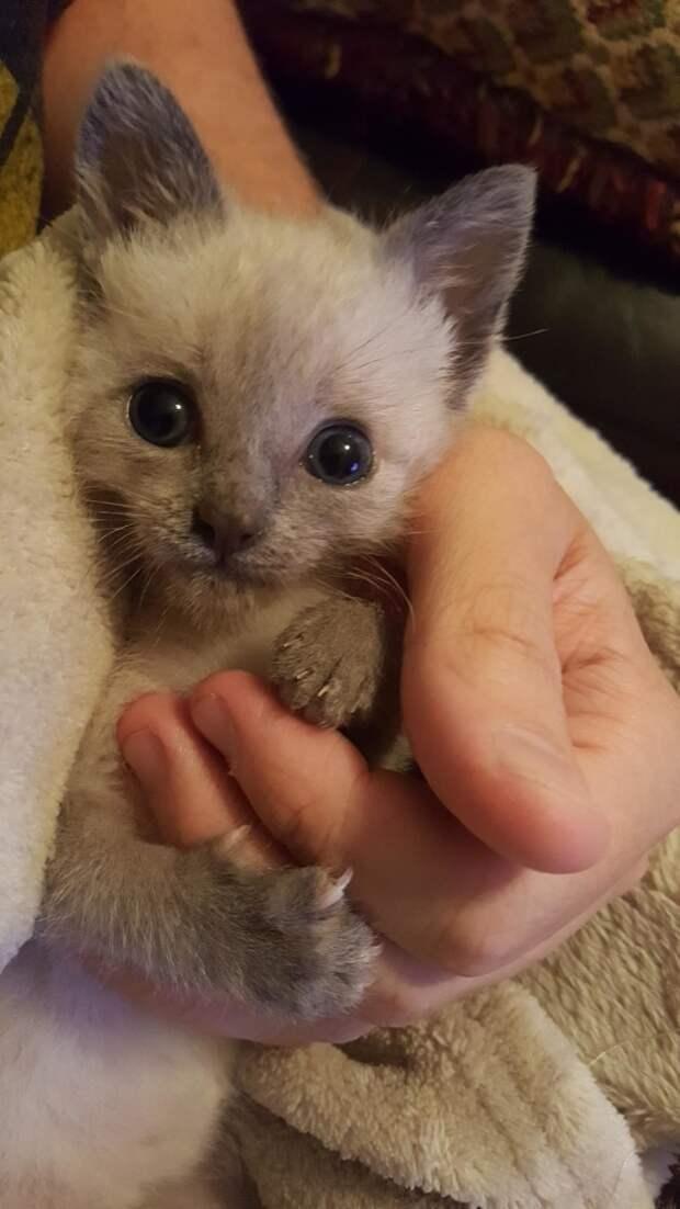 25. Еще один котэ (когтик видим?) котики, мимими