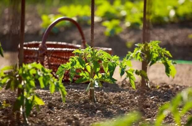 Как упростить уход за рассадой после высадки: 7 секретов для занятых людей