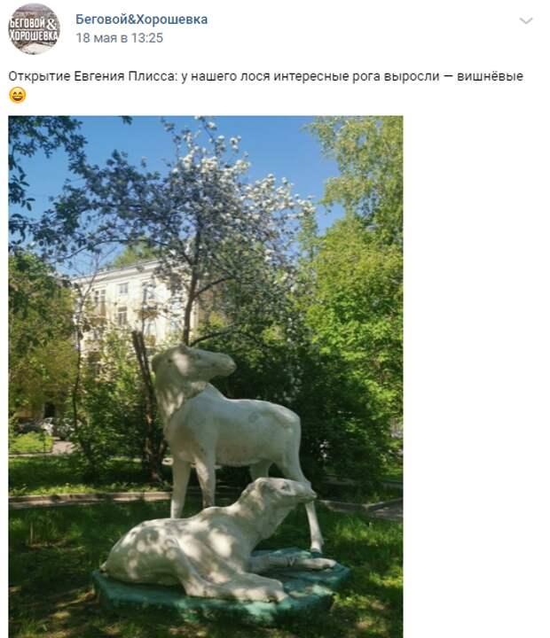 Фото дня: у оленей в Беговом появились рога