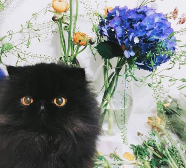 Чёрные котики— великолепны! Вот 15милах, вкоторых невозможно невлюбиться