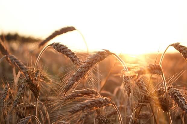Очередное повышение температуры ждет Удмуртию 19 августа