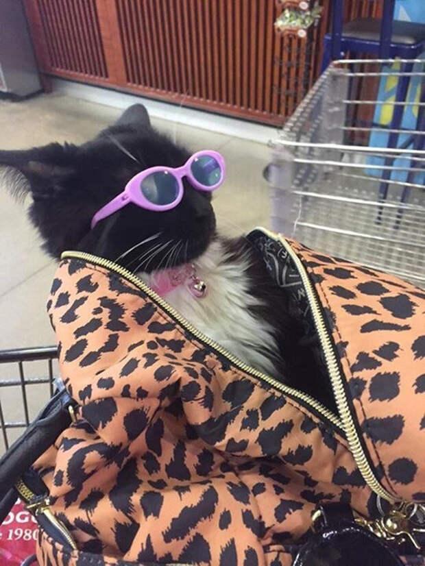 Животные тоже любят быть в тренде  мода, прикол, юмор