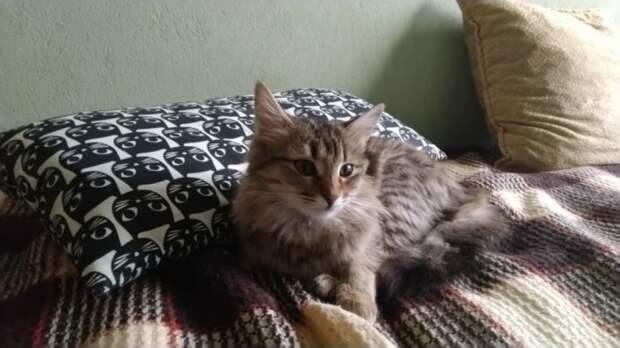 Мурчащий котик бежал за парнем до самого дома. Бездомная кошка точно знала, что она делала…