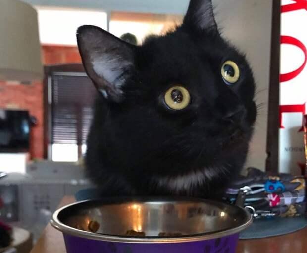 Беременная кошка каждый день приходила на порог дома, прося о помощи история, история спасения, коты, котята, кошки, помощь животным