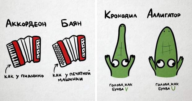 20 зарисовок, показывающих наглядно разницу между понятиями и объектами, которые все вечно путают