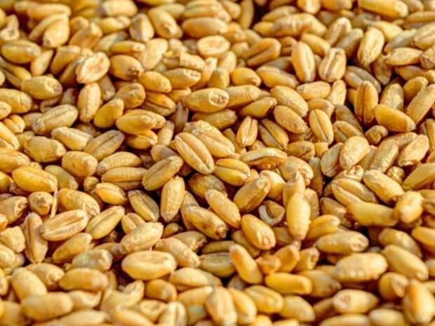 Экспорт пшеницы из России ощутимо сократился в январе–апреле