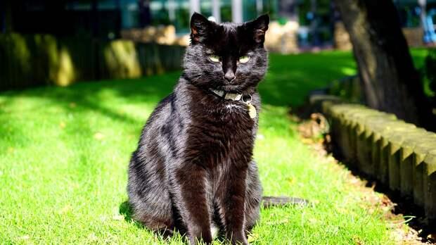 Дворик на Шоссейной облюбовали черные кошки / Фото: pixabay.com