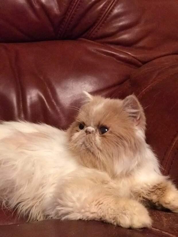 Персидский кот жил в подвале. Но встреча с добрыми людьми дала ему шанс