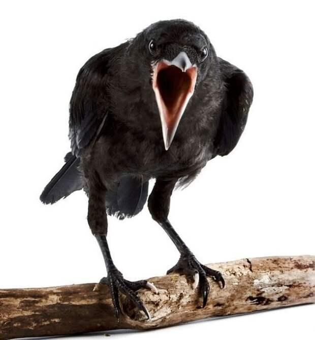Какие факты о птицах заставляют нас бояться их