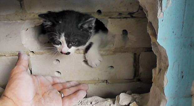 Тайна голодного котенка