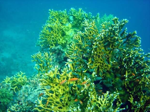 10 фактов оКрасном море