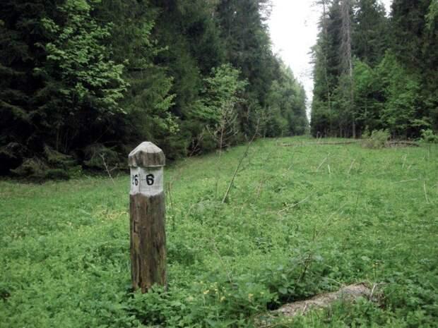 Как сходить в лес и не заблудиться
