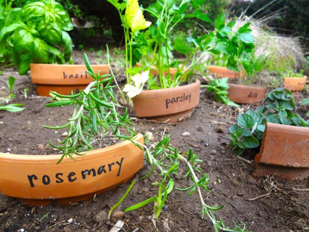 Подпись растений как искусство. /Фото: 3.bp.blogspot.com