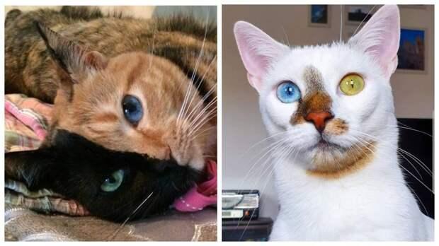 13 котов, которых природа наградила уникальным окрасом