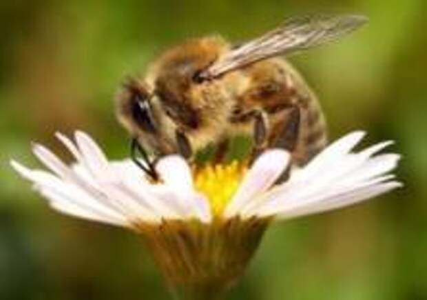Садовода посадили в тюрьму за убийство пчёл