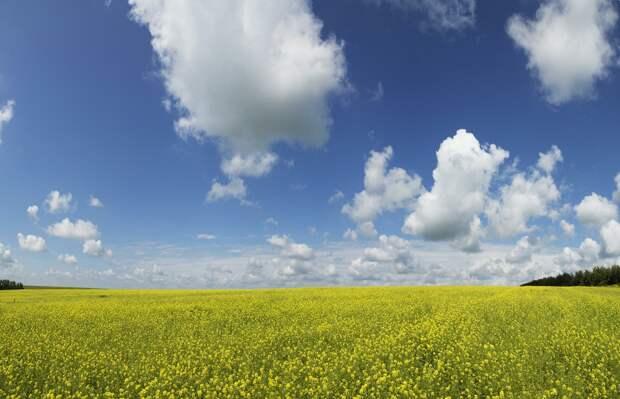 """Ротшильды травят нас ГМО, а наши семена забрали себе – """"на чёрный день"""". Те, что сберегли в блокаду"""