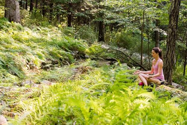 Японские врачи заставляют больных гулять по лесу! Вот почему