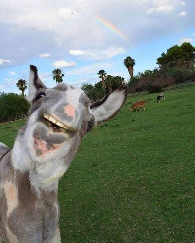 Позитивные фото и забавные картинки из сети