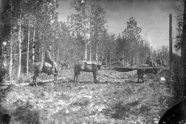 Главный способ передвижения по уральскому бездорожью. Фото из экспедиции М.А. Павлова. 1910-е гг.