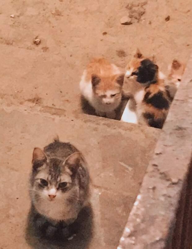 Детки, котятки, маленькие сердечки! Помогите им!