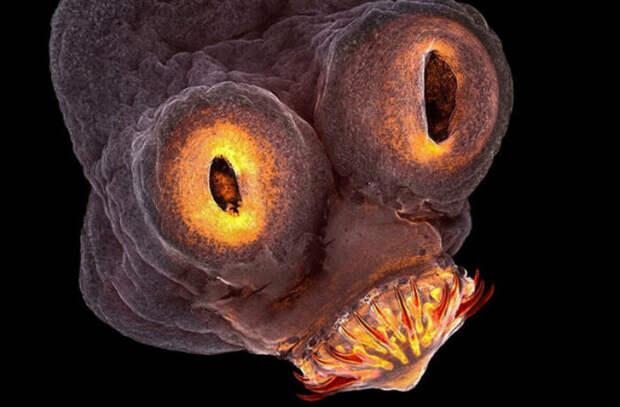 Вконкурсе научной фотографии победили цепень идетектор темной материи