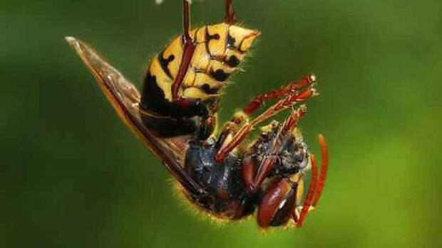 25 самых необычных и опасных паразитов