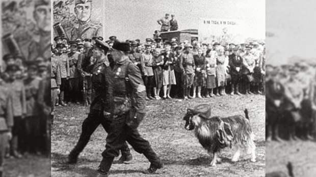 Почему в параде по случаю освобождения Минска рядом с партизанами маршировал козел, увешанный немецкими орденами?