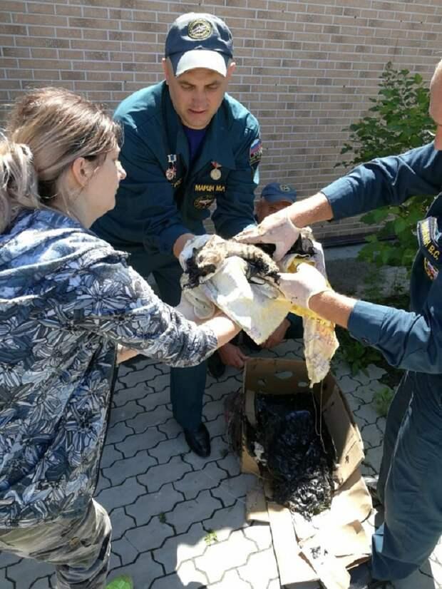 Спасателям пришлось разрезать ведро ножницами по металлу. Фото: new.dvrpso.ru