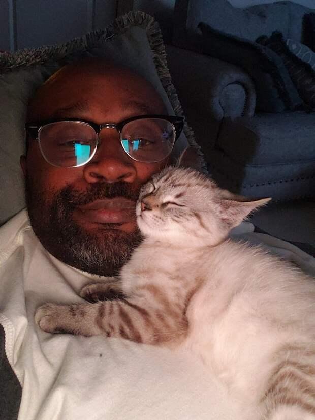 Когда правила диктуют коты: фото, доказывающие, что человек подчиняется МУРлыке