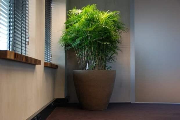 комнатные растения и их значения
