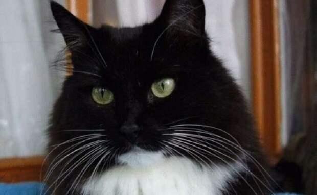 Прекрасный рассказ: «Вставная челюсть кота Маркиза».
