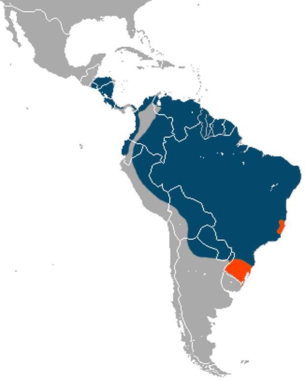 Гигантский или трехпалый муравьед (лат. Myrmecophaga tridactyla) (англ. Giant Anteater)