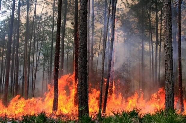 Молнии ударили по горящим лесам Калифорнии 11 тыс раз за 3 дня