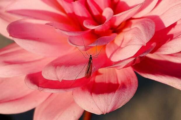 Два натуральных средства от комаров своими руками