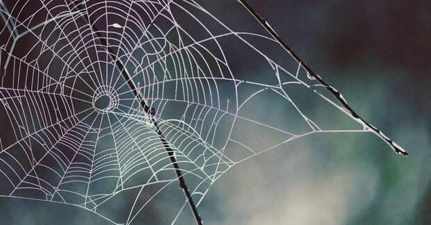 Ученые превратили паутину в мелодию