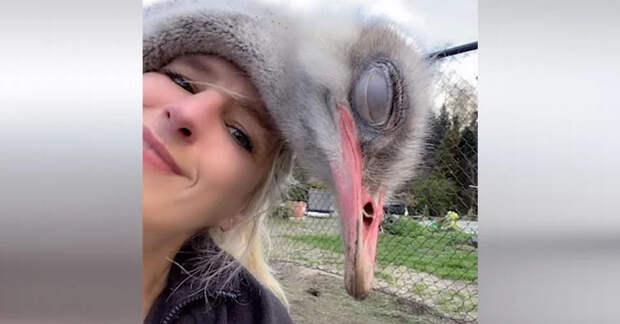 Познакомьтесь со спасательницей животных, которая любит обниматься с гигантскими страусами