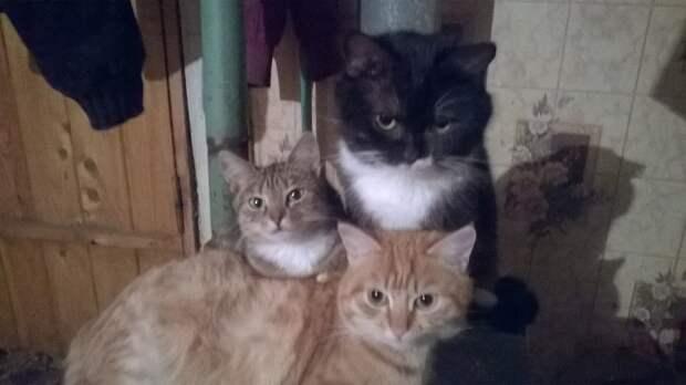 Три любимых пушистика нашей семьи!
