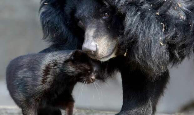 Медведица и кошка: чем закончилась незаурядная дружба длиною 10 лет